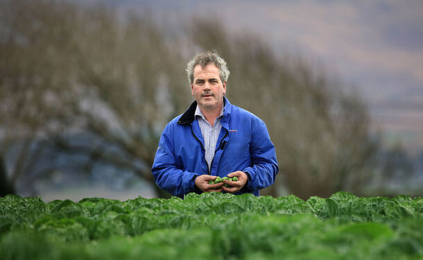SuperValu Agrees Financial Supports For Irish Vegetable Growers To Ease Drought Crisis